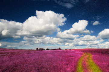 Wall Murals Crimson Magic Landscape – Pink Field and Sky with Real Stars