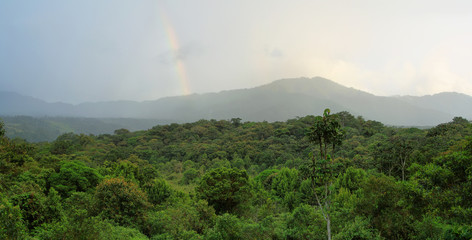 Landscape of ecuadorian cloudforest