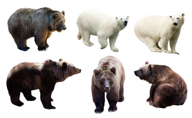 Fototapete - Set of polar and brown bears