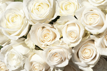 Bouquets of white roses