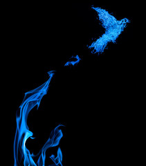 fire dove flying from blue flame isolated on black