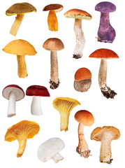 set of fifteen edible mushrooms isolated on white