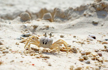 Close Up of a Ghost Crab on White Sand Beach