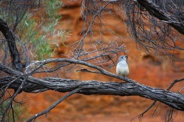 Fotoväggar - grauer Vogel auf einem Ast