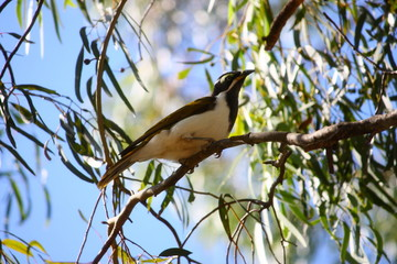 Fotoväggar - weiß brauner Vogel