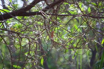 Fotoväggar - Papagei