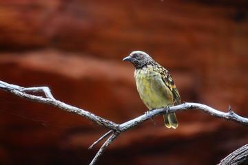 Fotoväggar - exotischer Vogel