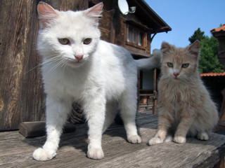 two kittens near home