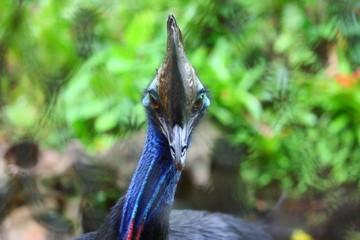Fotoväggar - blauer Vogel