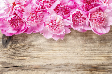 Stunning pink peonies on rustic brown wooden background