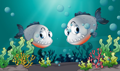 Two big grey fishes under the sea