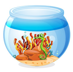 An aquarium with a seahorse