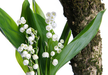 Wall Murals Lily of the valley Bouquet of lilies near a tree branch