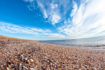 Shelly beach.