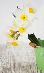 Photo sur Aluminium Narcisse daffodils