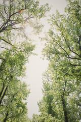 Treetops framing