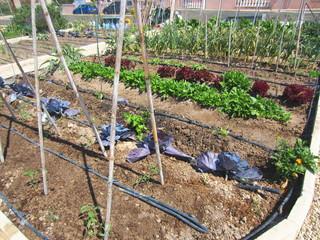 allotment horticulture