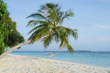 Beautiful palm beach in Maldives