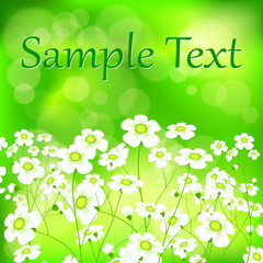 Spring flower background in green with bokeh, vector