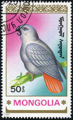 stamp printed by Mongolia, shows parrot