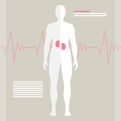 Vector Illustration of Human Kidneys