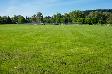 Freshly mown grass or turf