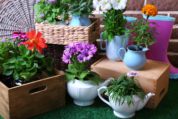 Flowers in  decorative pots and garden tools