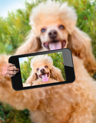 dog taking a selfie with a smartphone