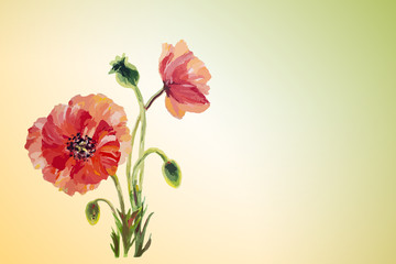 Poppies. Summer flowers invitation template card