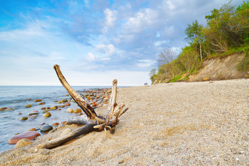 Trunk on a sandy beach.  The Baltic Sea coast landscape, Poland.