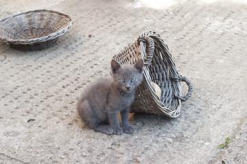 Cute kitten making a serious face