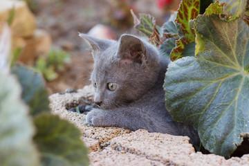 Kitten hiding under the flower leaf