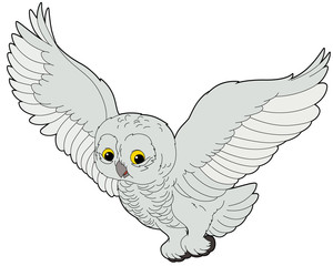 Cartoon animal - arctic owl - flat coloring style