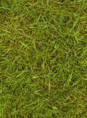 Papiers peints Herbe Lawn with grass and moss