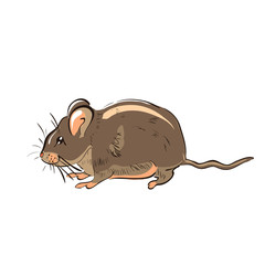 Illustration of hand drawn funny rat