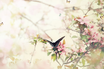 Swallowtail in Spring