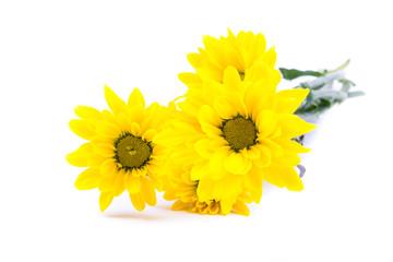yellow flower bunch