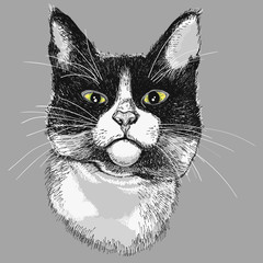 Portrait of a black and white cat. illustration