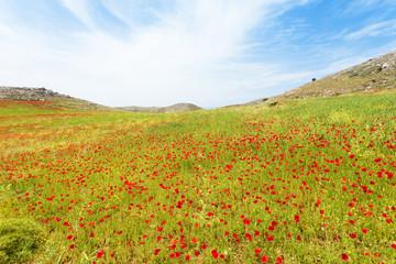 Kreta - Griechenland - Blütenmeer von Prevelhi