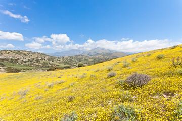 Kreta - Griechenland - Blütenmeer von Agia Galini