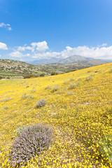 Kreta - Griechenland - Blumenwiese bei Agia Galini