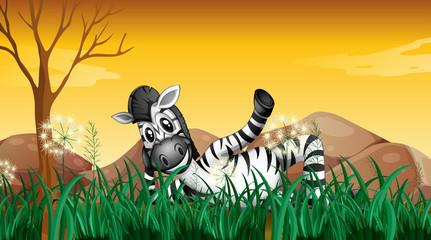 A zebra resting at the grassland near the big rocks