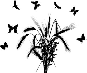 bunch of black cereal ears and butterflies on white