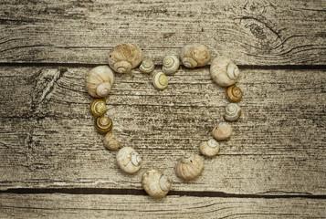 snail shell heart