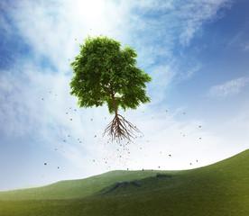 Flying tree