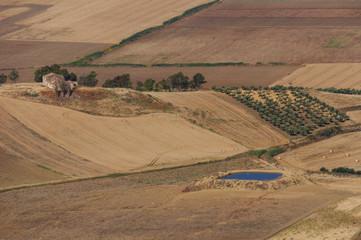 Paesaggio Niscemi
