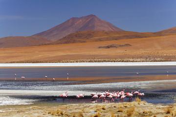laguna na pustyni