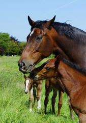 Beautiful horse with foal