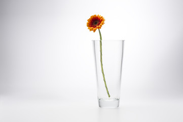 Yellow Gerbera Daisy in a stylish glass vase