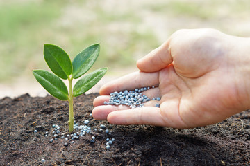 a hand giving fertilizer to a young plant / planting tree